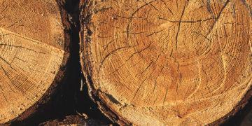 Habr - palivové dřevo