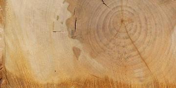 Lípa - palivové dřevo