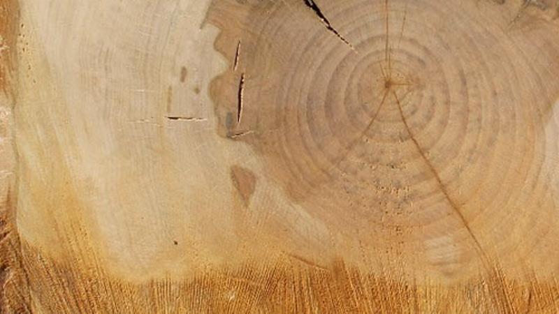lipa - palivové dřevo