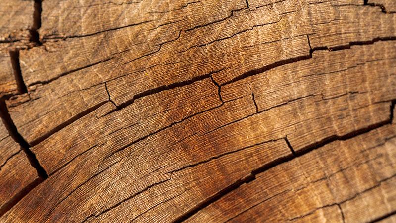 Ovocné stromy - palivové dřevo