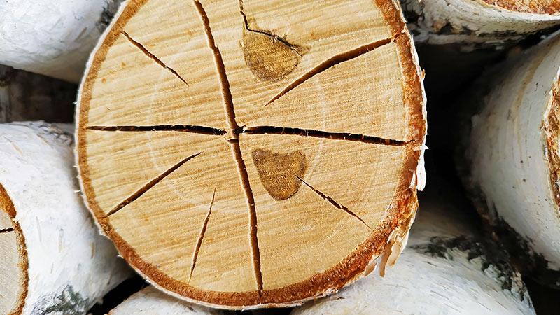 Bříza - palivové dřevo