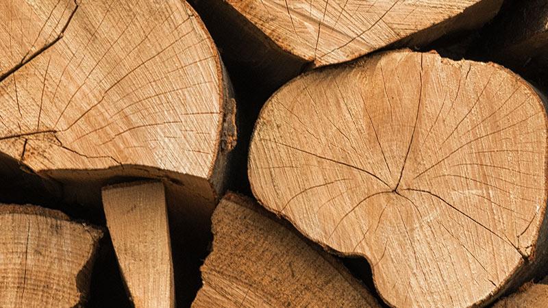 Palivové dřevo buk