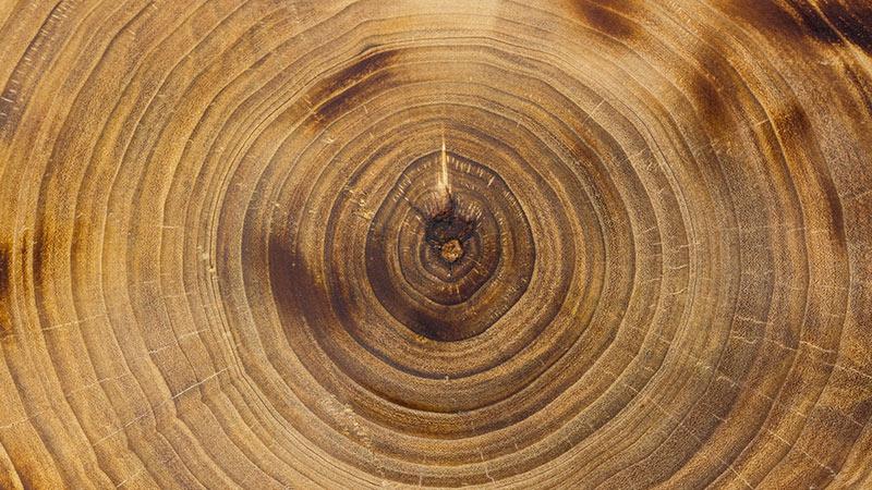 Topol - palivové dřevo